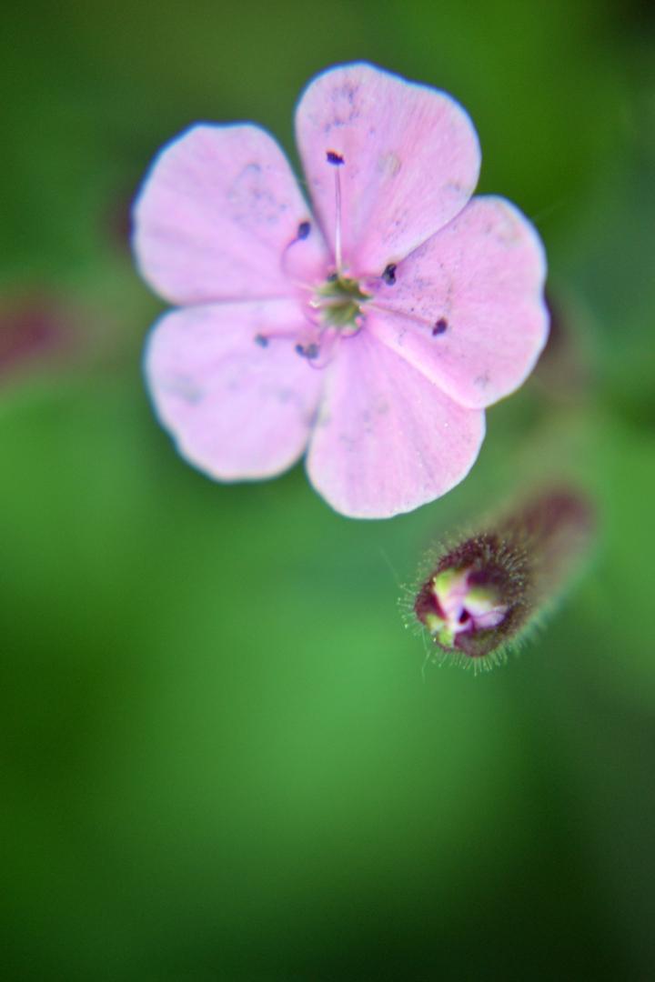 Flowers - 21
