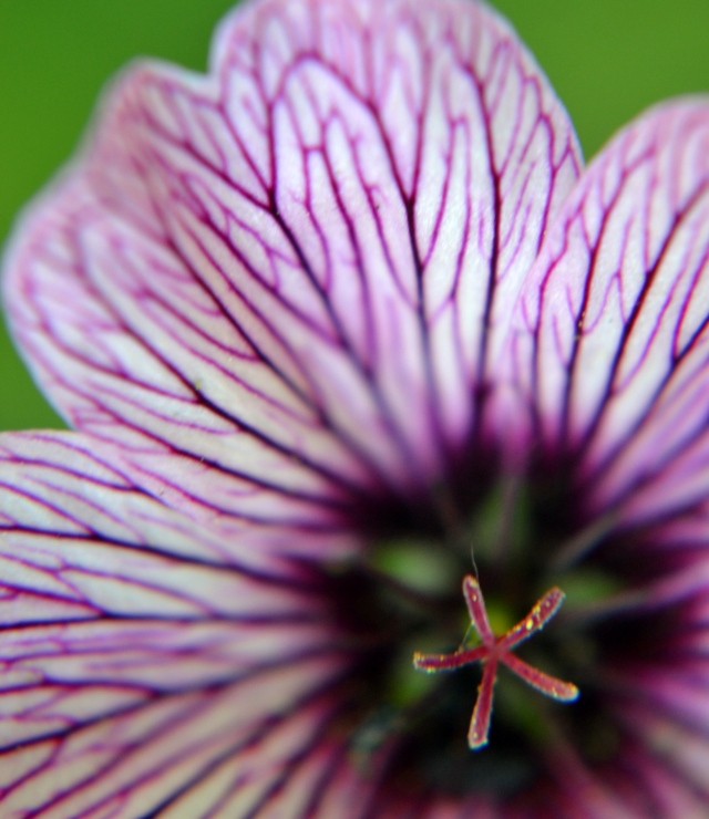 Flowers - 14
