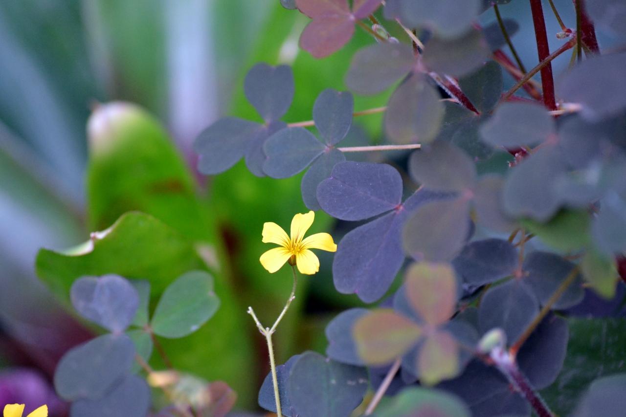 A little flower in a