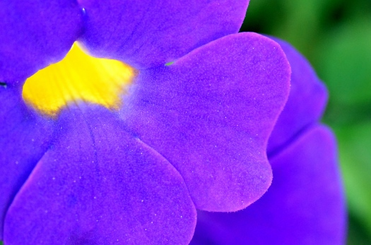 Delray - Thursday - Japanese Gardens 020