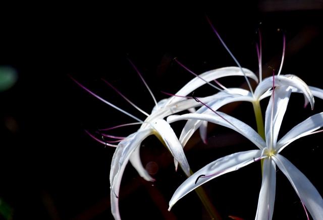 Delray - Thursday - Japanese Gardens 044