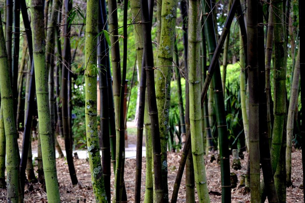 Delray - Thursday - Japanese Gardens 062