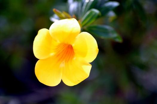 Delray - Thursday - Japanese Gardens 051